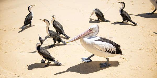 Vögel ruhend Strand andere Tag Insel Stock foto © artistrobd