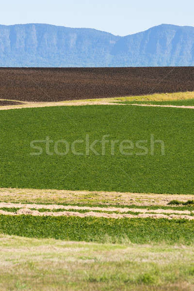 Country agricultural and farming field Stock photo © artistrobd