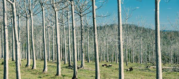 木 国 フィールド 抽象的な 午後 ストックフォト © artistrobd
