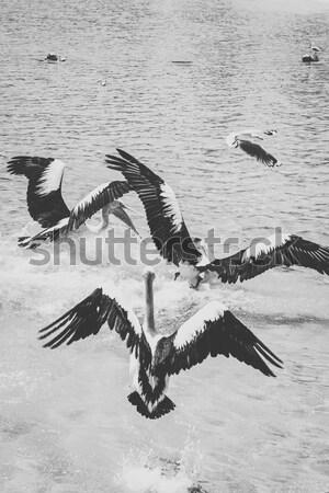 Eau jour île queensland ouest Photo stock © artistrobd