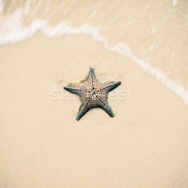 Starfish on the beach sand. Close up. Stock photo © artistrobd