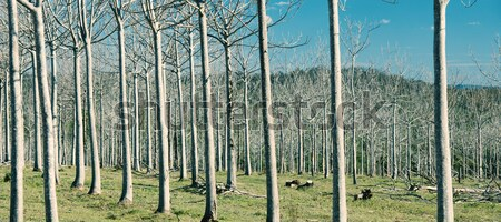 Trees in the country field  Stock photo © artistrobd