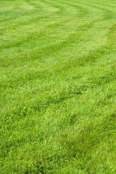 green grass background with stripes Stock photo © artjazz