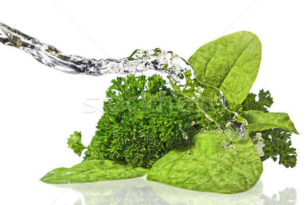 Bouquet of parsley and spinach isolated on white  Stock photo © artjazz