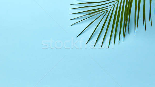Green palm leaf on a blue background with copy space. Layout for your ideas. Flat lay Stock photo © artjazz