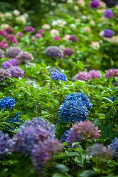 Cor flores jardim verão flor folha Foto stock © artjazz