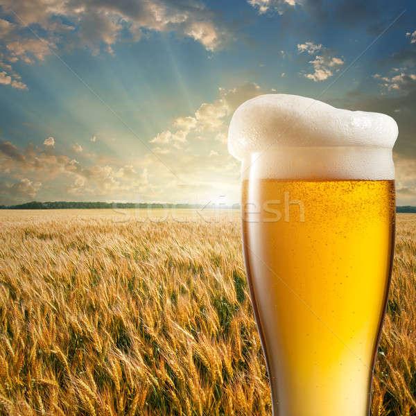 üveg sör búzamező naplemente háttér nyár Stock fotó © artjazz