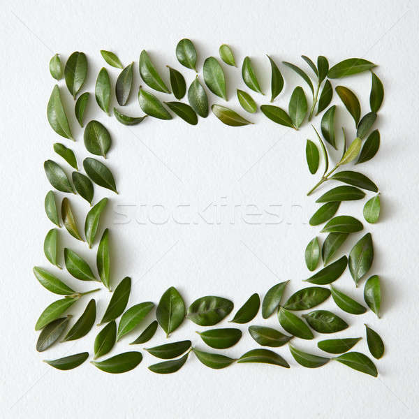 Stock photo: Square shape of green leaves