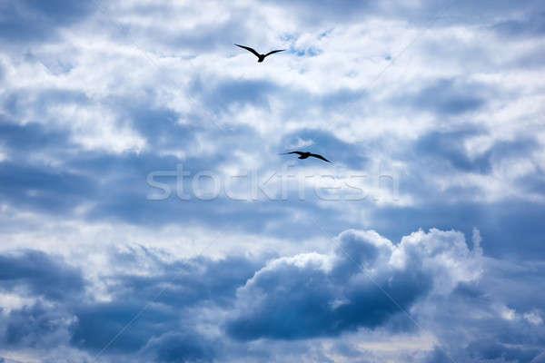 gulls flying in the sky Stock photo © artjazz