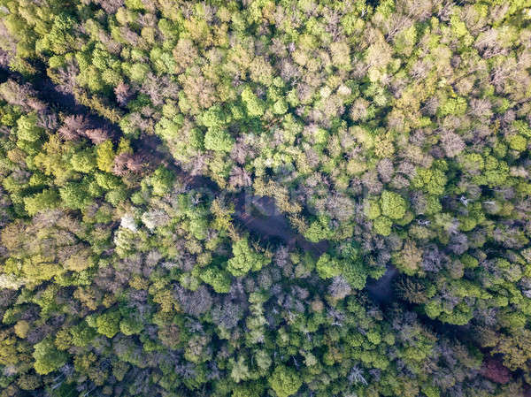 A bird's eye view from drone on diagonally Forest Road. Stock photo © artjazz