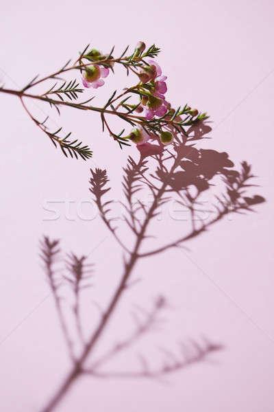весны филиала розовый цветы Creative тень Сток-фото © artjazz