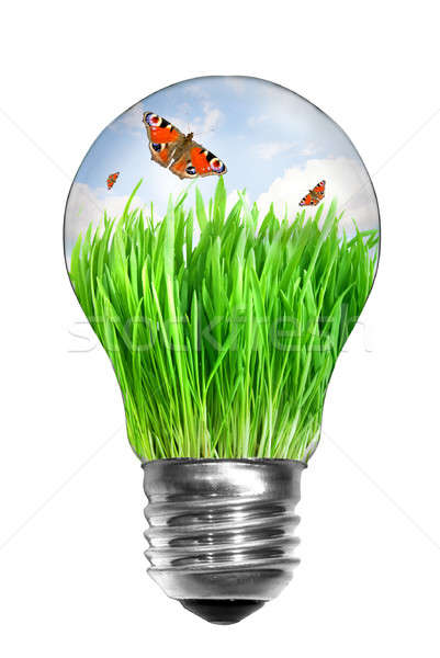 Natural energy concept. Light bulb with summer meadow and butterflies inside isolated on white Stock photo © artjazz