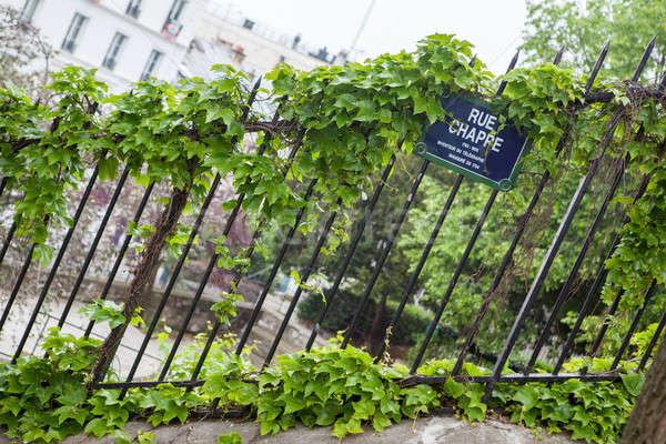 Sarmaşık yaprakları demir çit yeşil ev Stok fotoğraf © artjazz