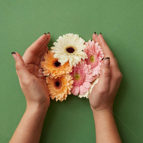 Female hands hold different gerbera flowers on a green paper background Stock photo © artjazz