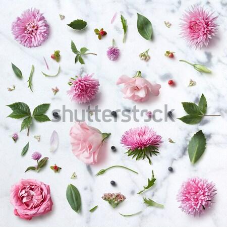 Stok fotoğraf: çiçekler · yumuşak · güller · yaprakları · beyaz