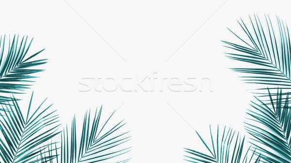 Green coconut leaves frame isolated on white background Stock photo © artjazz