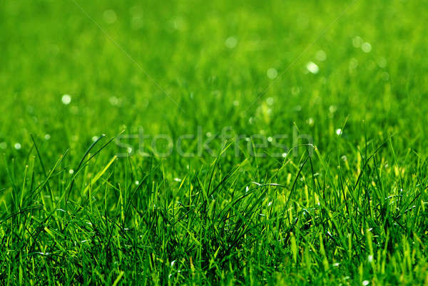 green grass background Stock photo © artjazz