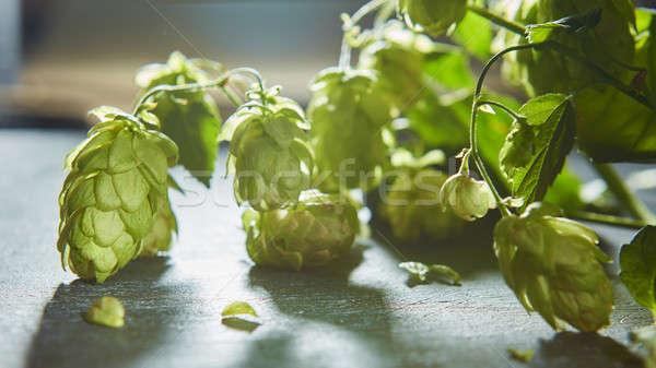 Fresche rami verde hop legno vecchio vecchio Foto d'archivio © artjazz