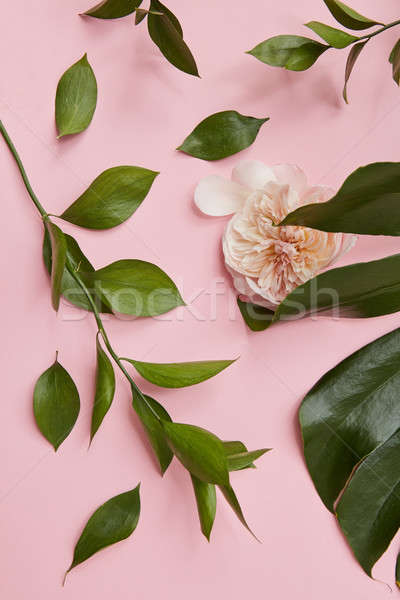 Groene geïsoleerd veel ander bladeren roze Stockfoto © artjazz