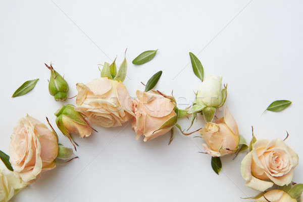 Stock photo: roses and leaves