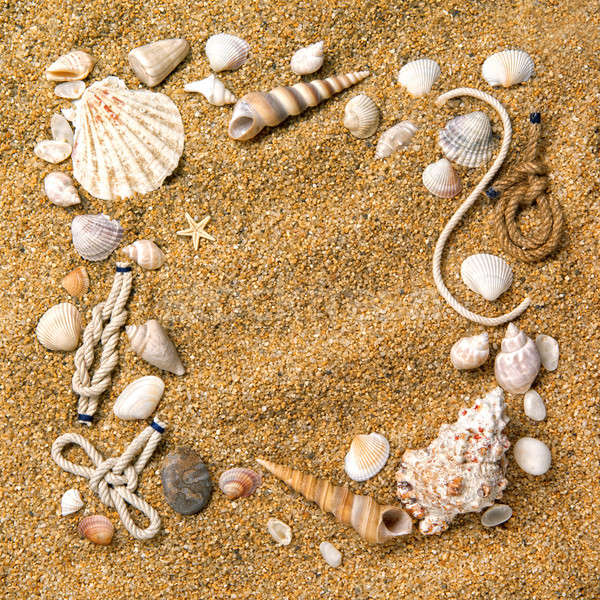 frame from various shells on sand Stock photo © artjazz