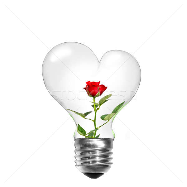 Natural energy concept. Light bulb in shape of heart with red rose inside isolated on white Stock photo © artjazz
