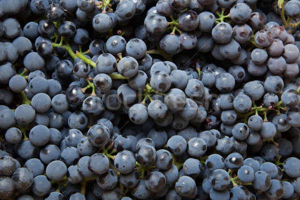 background from blue grape Stock photo © artjazz