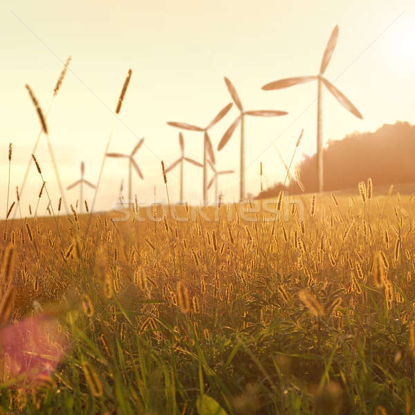 風 ジェネレータ 日没 空 ツリー 太陽 ストックフォト © artjazz
