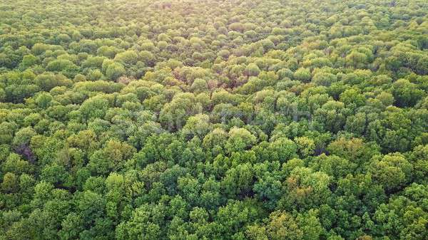Panoramic view of the green deciduous forest. Photo from the drone Stock photo © artjazz