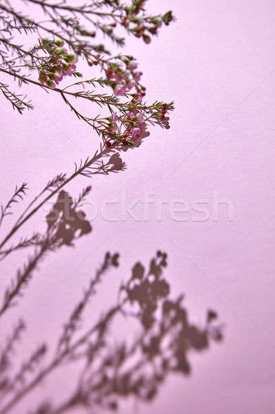 Oddziału różowy kwiaty kwiat wiosną kolorowy Zdjęcia stock © artjazz