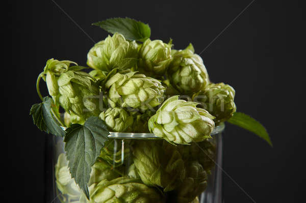 Stock photo: hops in a beer glass