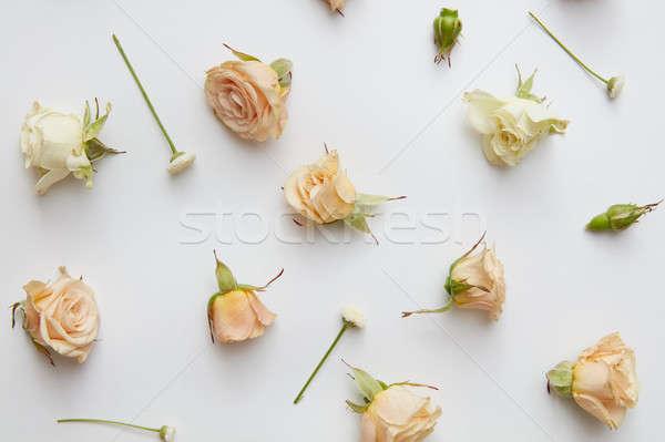 Stok fotoğraf: Güller · bej · yaprakları · yalıtılmış · beyaz · düğün