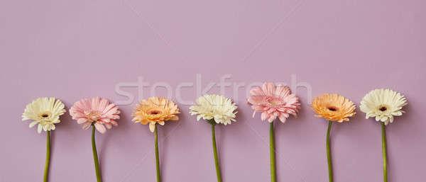 Wiosną świeże pachnący różowy papieru pocztówkę Zdjęcia stock © artjazz