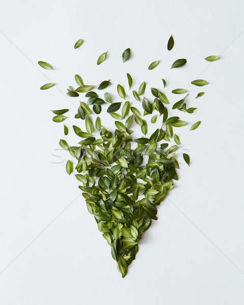 Green bush over white Stock photo © artjazz
