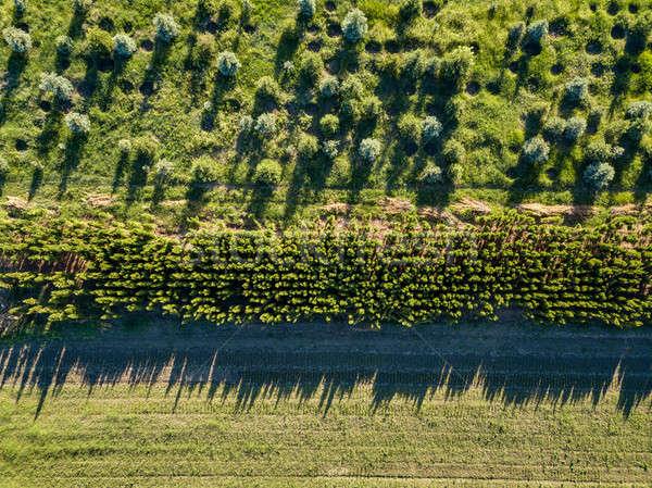 Légifelvétel zöld mező fiatal fák ökológiai Stock fotó © artjazz