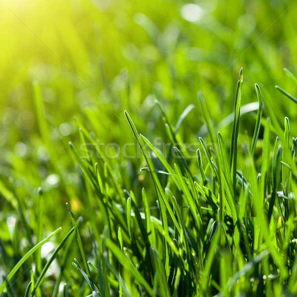 Stock fotó: Zöld · fű · nap · nyaláb · absztrakt · művészet · nyár
