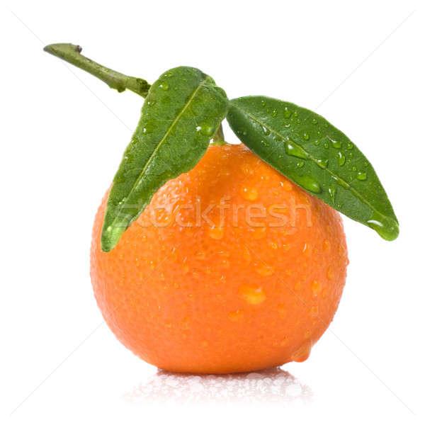 Mandarine grüne Blätter Wassertropfen isoliert weiß Essen Stock foto © artjazz