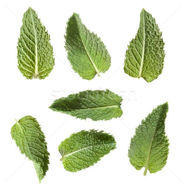 green mint isolated on white Stock photo © artjazz