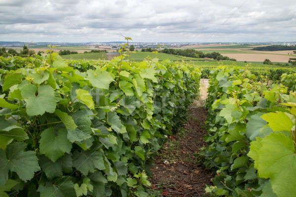 Stockfoto: Wijngaard · landschap · Frankrijk · huizen · horizon · hemel