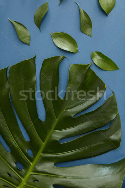 Yeşil yaprakları yalıtılmış üst görmek peynir bitki Stok fotoğraf © artjazz