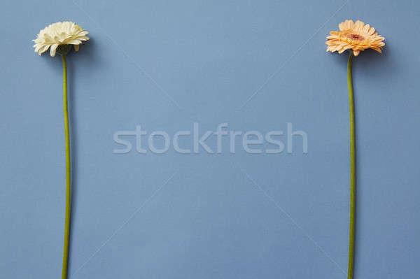 Naranja blanco aislado azul papel juego Foto stock © artjazz