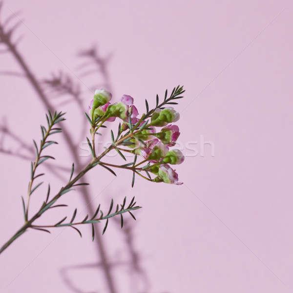 Stock fotó: Tavasz · ág · rózsaszín · virágok · virágzó · zöld · levelek