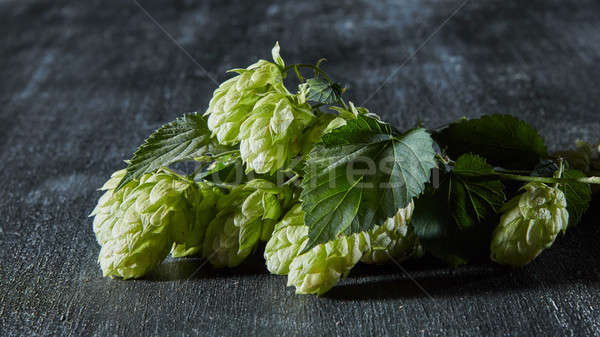 Fresh green hop branch on wooden background. Stock photo © artjazz