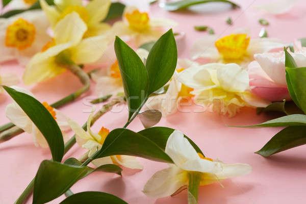 Beyaz çiçekler yandan görünüş farklı çiçekler pembe yeşil yaprakları Stok fotoğraf © artjazz