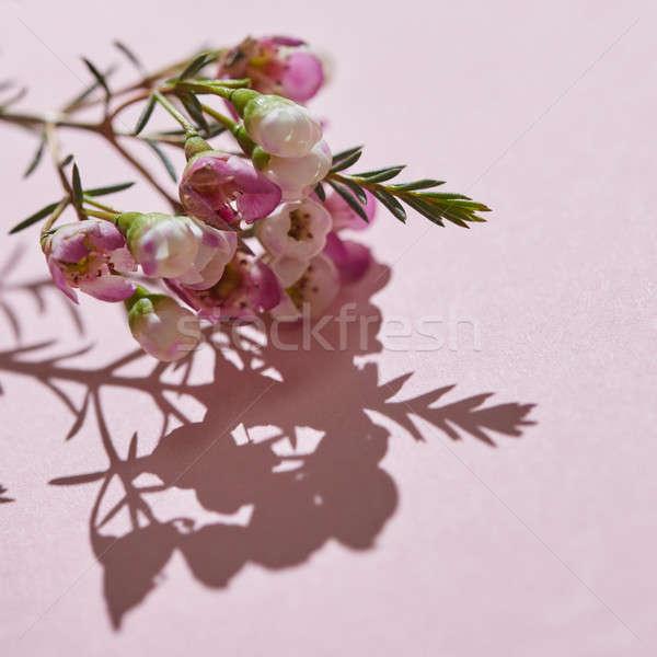 Gyönyörű gyengéd gally rózsaszín virágok kreatív Stock fotó © artjazz