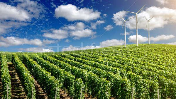 Szél nyár tájkép kék ég fa fű Stock fotó © artjazz