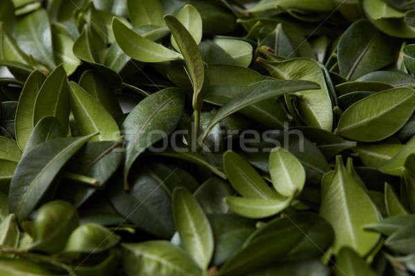 Feuilles vertes espace de copie idées passions texture Photo stock © artjazz