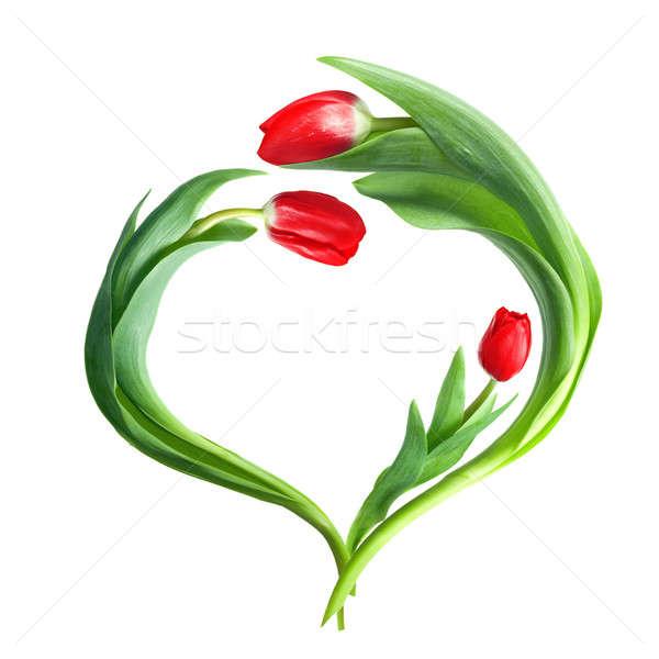 Szív piros tulipánok izolált fehér húsvét Stock fotó © artjazz