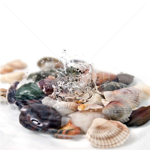 water splash with various color shells isolated on white Stock photo © artjazz