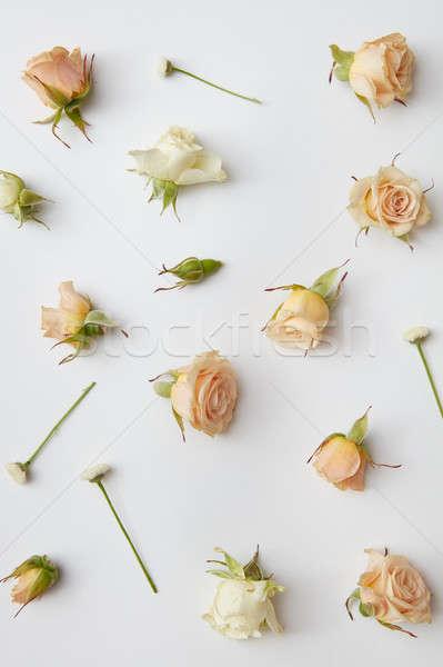 round frame of roses buds Stock photo © artjazz